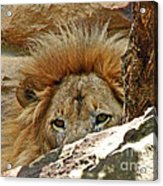I'm Watching You Acrylic Print