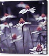 Imagine F02a Acrylic Print