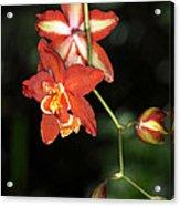 Img8365 Acrylic Print