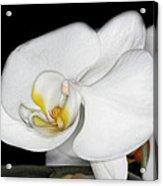 Img8388 Acrylic Print