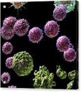 Immune Response Cytotoxic 2 Acrylic Print