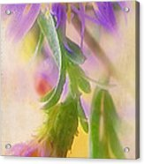 Impression Of Asters Acrylic Print