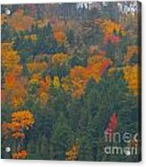 Imprssions Of Autumn Acrylic Print