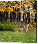 In A Yellow Wood Acrylic Print