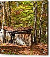 In Autumn Woods Acrylic Print by Steve Harrington