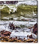 In-coming Tide Acrylic Print