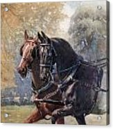 In Double Harness. Illustration By Lucy Acrylic Print
