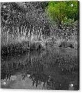 In Natures Corner Acrylic Print