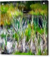 In The Bog Acrylic Print