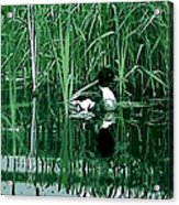 in the Bulrushes Acrylic Print