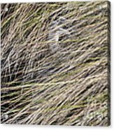 In The Grass Acrylic Print