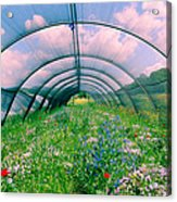 In The Greenhouse Acrylic Print