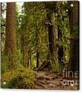 In The Land Of The Giants  Acrylic Print