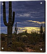In The Shadow Of The Saguaro  Acrylic Print
