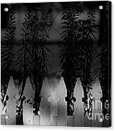 In The Shadows Acrylic Print