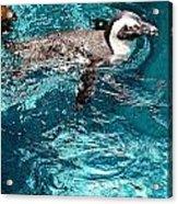 In The Swim Acrylic Print