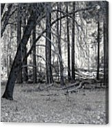 In The Woods Acrylic Print