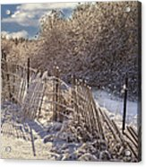 In Winter's Chill Acrylic Print