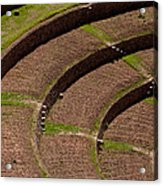 Inca Crop Terraces At Moray Acrylic Print