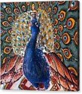 India: Peacock Acrylic Print