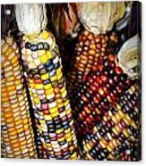 Indian Corn 2 Acrylic Print