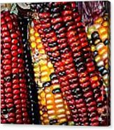 Indian Corn Acrylic Print