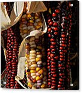 Indian Corn Acrylic Print by Susan Herber