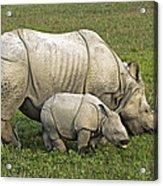 Indian Rhinoceroses Acrylic Print by Tony Camacho
