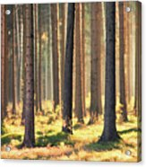 Indian Summer In Woods Acrylic Print by Matthias Haker Photography