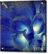 Indigo Dew II Acrylic Print