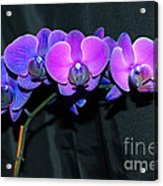 Indigo Mystique Orchids  Acrylic Print