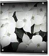 Inflorescence Acrylic Print