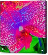 Inner Beauty - Orchid - Gardens Acrylic Print