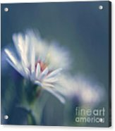 Innocence - 03 Acrylic Print