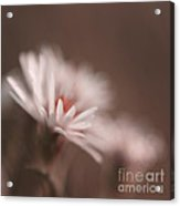 Innocence - 05-01a Acrylic Print by Variance Collections