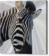 Inquisitive  Acrylic Print
