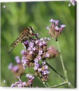 Insect And Flower Acrylic Print