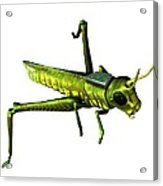 Insect Spy, Conceptual Artwork Acrylic Print