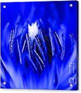 Inside A Flower Acrylic Print