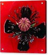 Inside A Poppy Acrylic Print