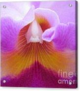 Inside An Orchid's Heart Acrylic Print