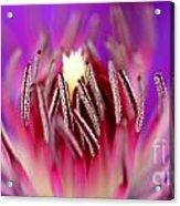 Inside Of A Flower Acrylic Print