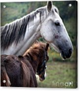 Instinct Of Love Acrylic Print by Karen Wiles