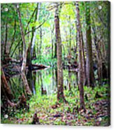 Into The Swamp Acrylic Print