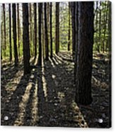 Into The Woods Spnc Michigan Acrylic Print