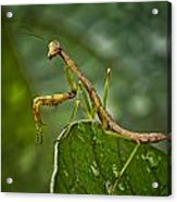 Invasion Of The Insect Snatcher Acrylic Print by Michael Putnam