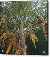 Invertebrate Life Growing On The Roots Acrylic Print by Tim Laman