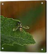 Iridescent Fly 1 Acrylic Print