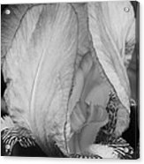 Iris 2 In Black And White Acrylic Print