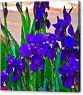 Iris 23 Acrylic Print by Pamela Cooper